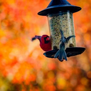 How to feed birds in garden