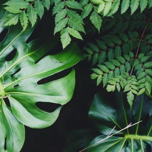 Plants Care   Prevent Bugs