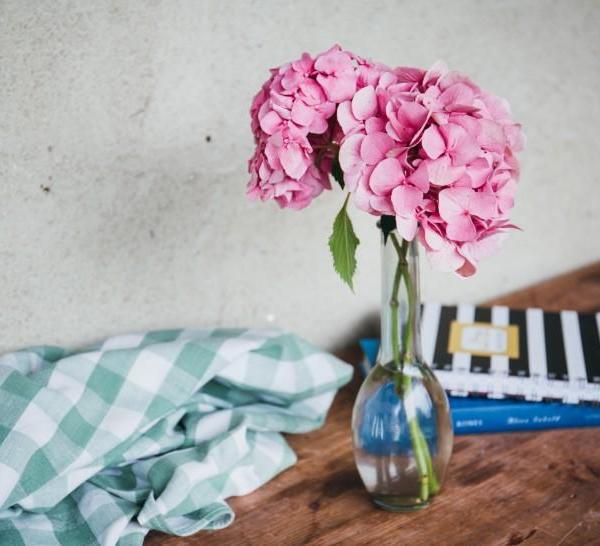 花卉植物的净化功能