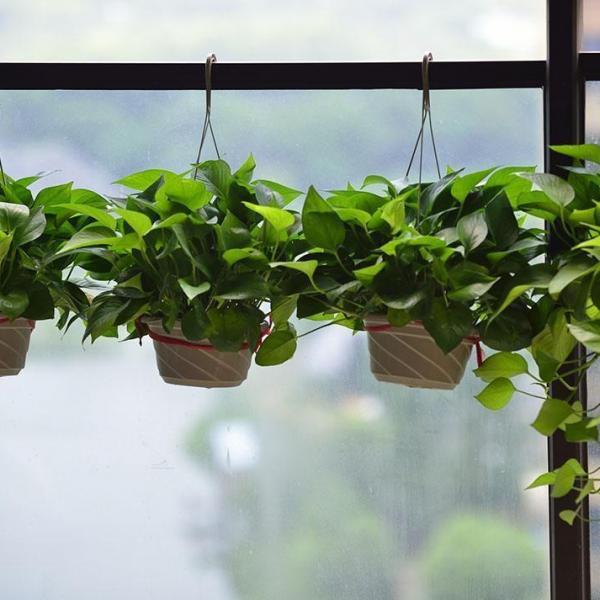 阳台植物布置八大窍门