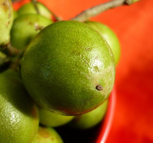 How to Grow Mamoncillo | Information on Growing Mamoncillo