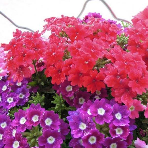 盆栽花卉不同时期的养护要点