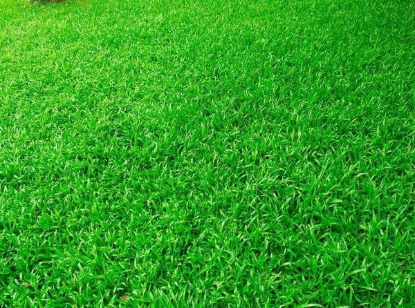 The Best Grass Seed for the Northeast