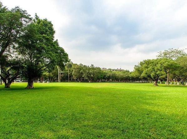 草坪类病害:德氏霉叶枯病
