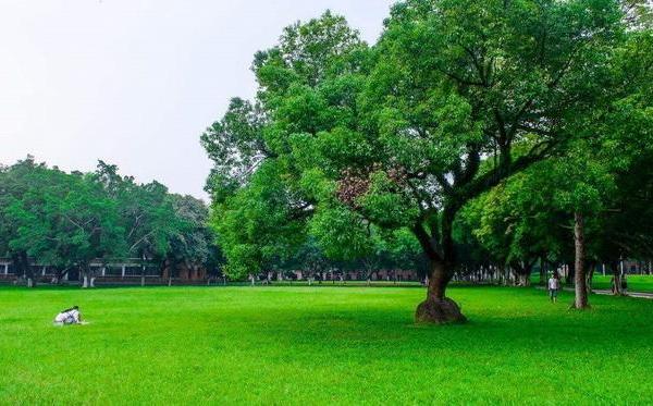 草坪类病害:草坪仙环病