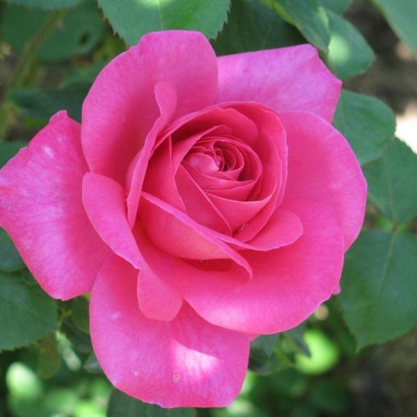 """花也需要""""洗澡"""",每次擦一擦,叶片油亮能反光!"""