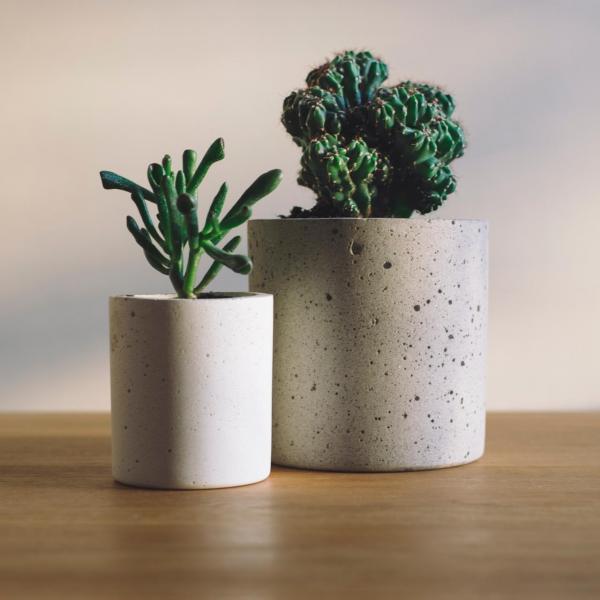 Succulent Plants II