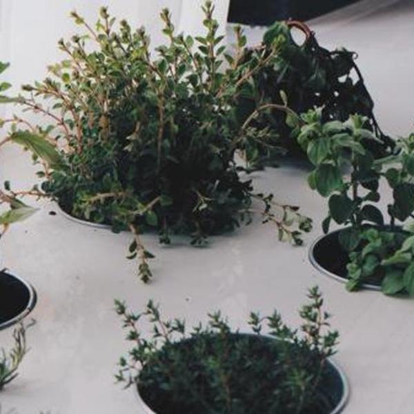 家庭养花群体如何提升养花质量的技巧?