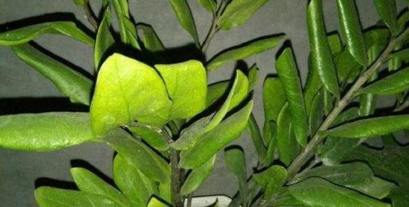 养花常见的12种病症,一招救治,还不快收藏起来!