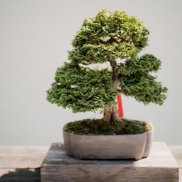 What is Bonsai?