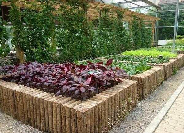 How Often Should I Water My Vegetable Garden?