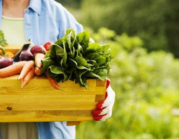 When to Plant a Vegetable Garden in Missouri