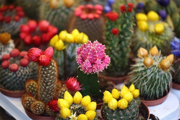 哪些花草可以净化室内空气?