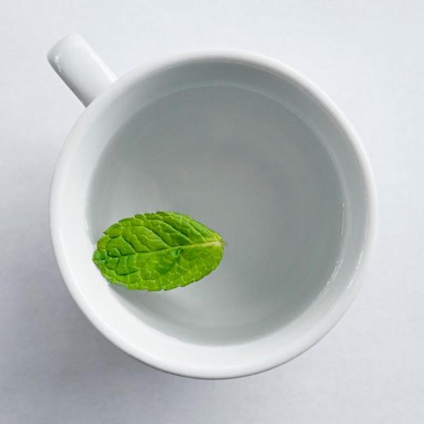 Mint   Grow & Drink
