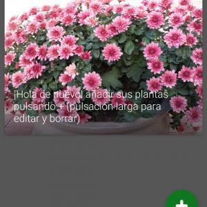 plantas onerror=