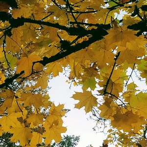 Maple tree onerror=