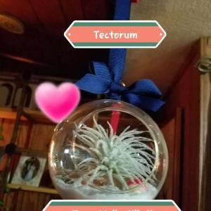 Tectorum
