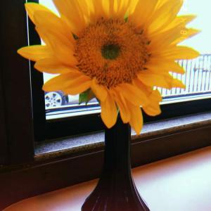 sunflower onerror=