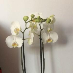 Orquídeas onerror=