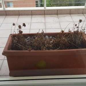 dry plant! onerror=