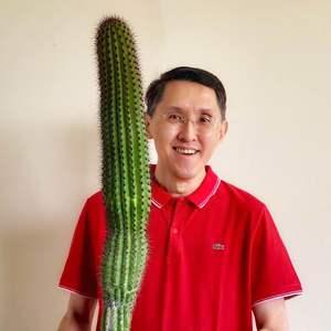 Columnar Cactus onerror=