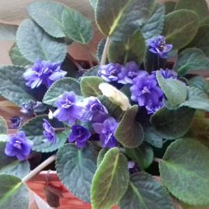 violeta onerror=