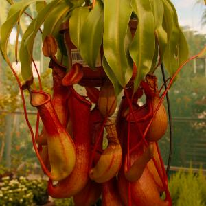 Pitcher Plant onerror=