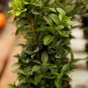 Box plant onerror=