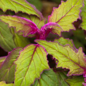 Purple Passion onerror=