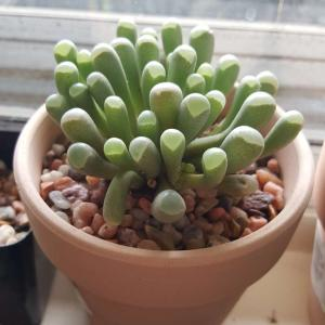 Baby toes  - Green Fingers(GFinger)Enciclopedia