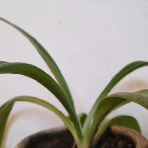 Plant 1 onerror=