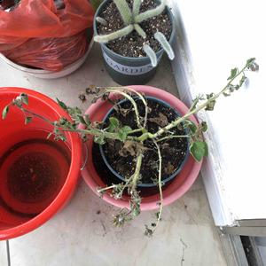 20-10-11和忘记浇水的向日葵一起拍个照