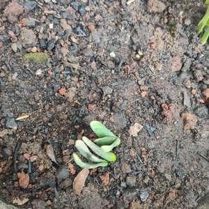 水仙、洋水仙、郁金香混种了 不过真的很快