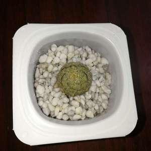 """我新添加了一棵""""Euphorbia piscidermis 鱼鳞大戟""""到我的""""花园"""""""