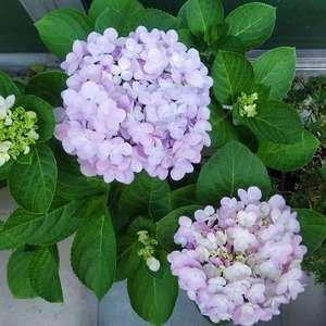 感觉被坑了……😂以后买花还是得买那种有挂花的比较对版!看在他盛开得如此美丽,我决定原谅他了~