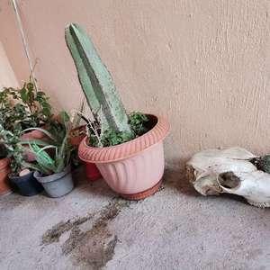 I Nuevo agregado un cactacea en mi jardín
