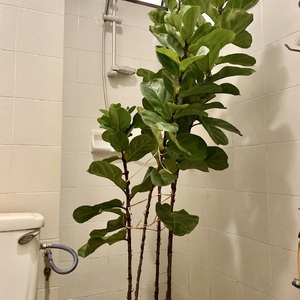 Gave my FLF a first shower.