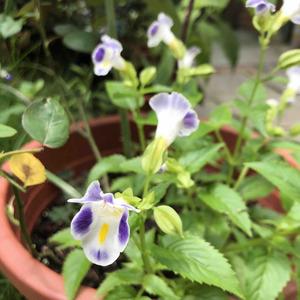 今年夏堇又準時報到,開出了跟之前截然不同的花色