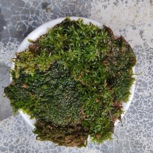A植物事件