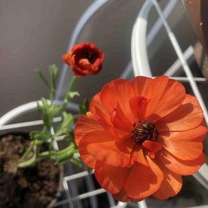 又开了两朵小花,真好看🤔