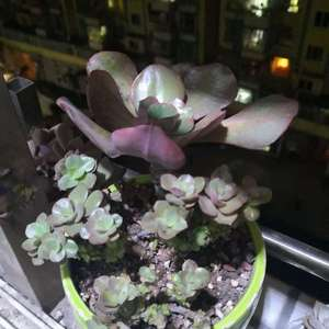 这一盆,大叶带小叶,都长好了💥💥
