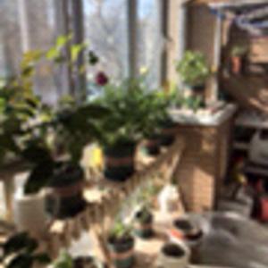 冬日的阳台,还是一片欣欣向荣~ 怕冻的已经搬进客厅