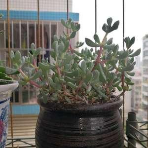 鹿角海棠和白鹭