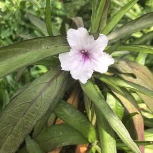 粉紅色的花比紫色花討喜