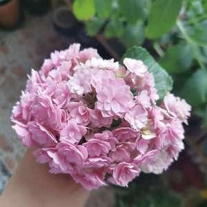 小小一个但还是开了两朵不错的花,修剪了