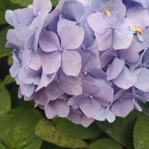 花变大朵了