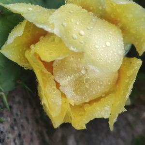 仙人掌的花朵很高级