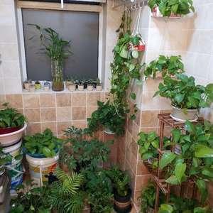 """我新添加了一棵""""绿萝""""到我的""""花园"""""""