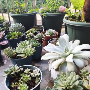 露台小花园给我的惊喜
