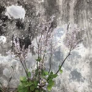 雖然是極普通的植物,開花就會美